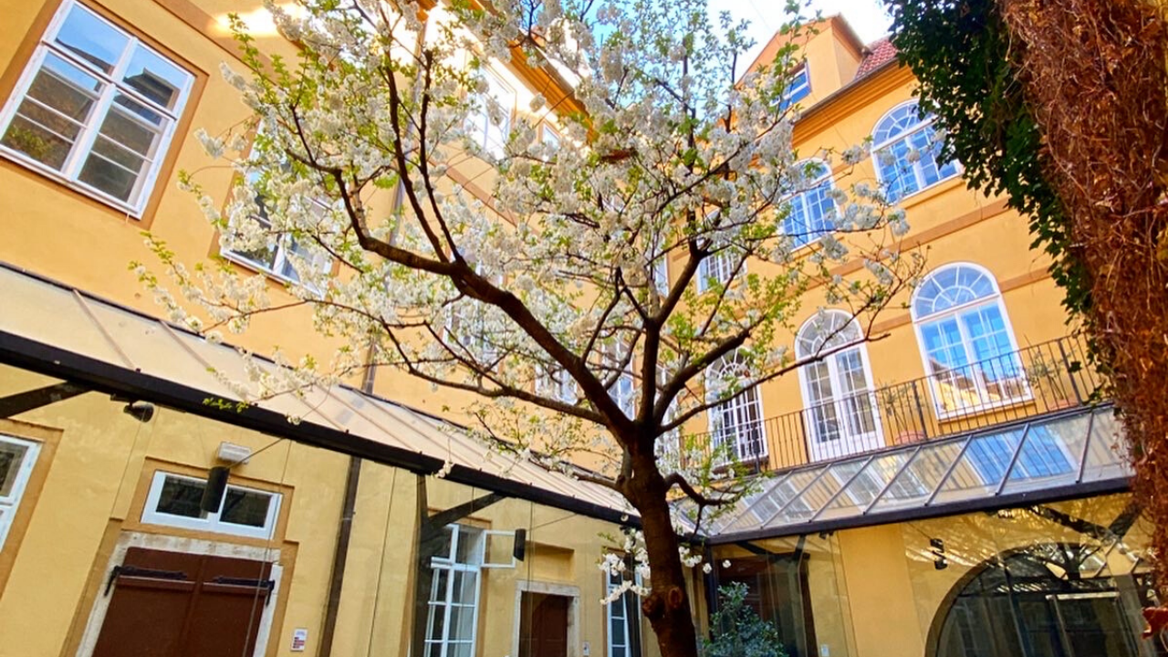 NC State Prague Building Courtyard with a blooming tree in the middle